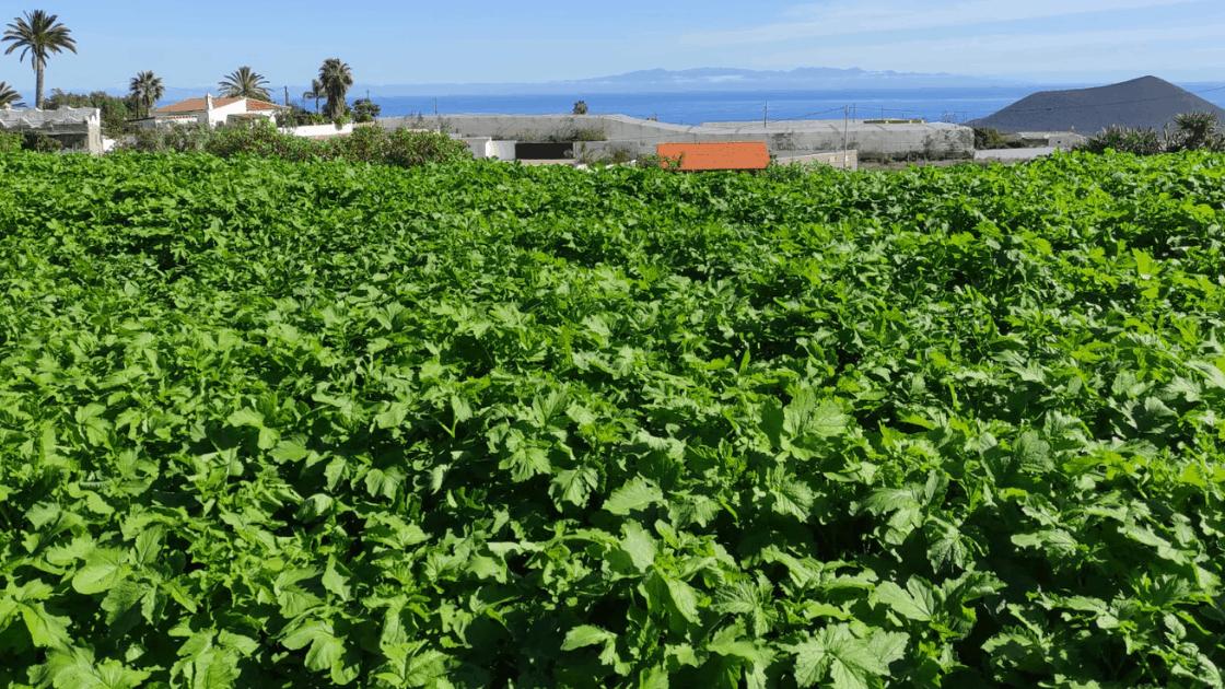 ¿Por qué consumir alimentos de agricultura ecológica?